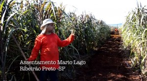 video-agroflorestar-canteiro-mecanizado