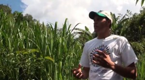 video-agroflorestar-manejo-1-ano